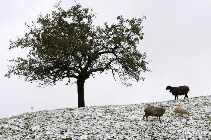 GELO: la Coldiretti lancia l'allarme, colture a rischio